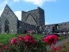 port_abbey_ireland